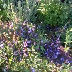 The garden earlier this summer
